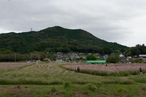コスモス畑の背に日和田山
