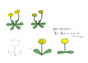 タンポポの描き方2