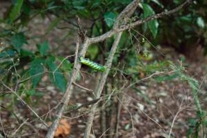 でかいイモムシに、丸裸の木が対照的でシュール