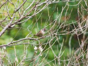 秋の夕暮。桜の木の枝に留まる雀