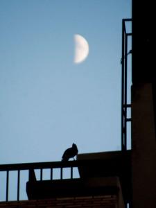 月下のカラス