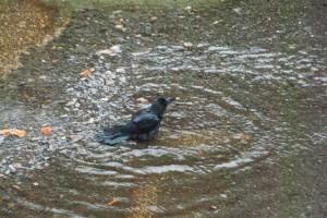 数秒浴びては周りに注意を戻し、また浴びるを繰り返す