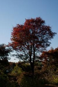 紅葉が始まっていた