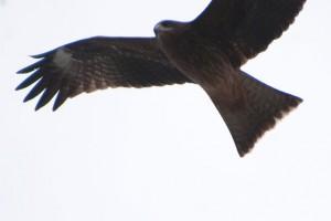 鳥に合わせると、空が飛んでしまう