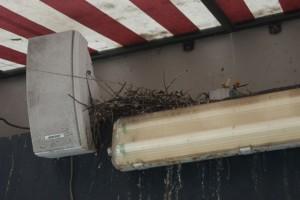 Pock Pigeon Nest