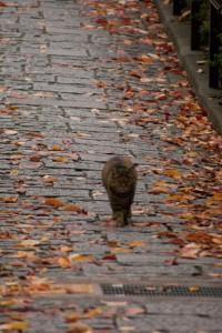 落ち葉と猫と石畳
