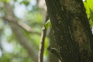 巣に戻る親鳥