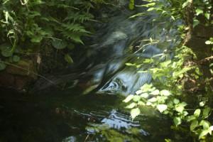 湧水が湧水地点から川へ流れ出て行くところ
