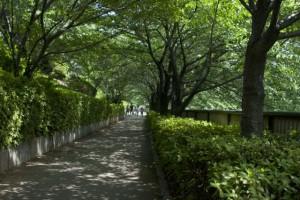 なかめ公園橋と中里橋の間の歩道