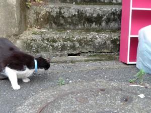 穴を覗く飼い猫