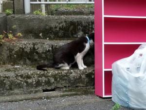 追い駆ける飼い猫