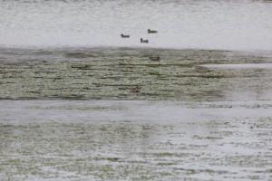 養殖池にやってきた水鳥