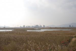 広大な芦原