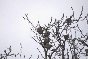 枝で休むスズメ