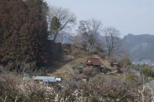 吉野梅郷 青梅市梅の公園の向かいの山