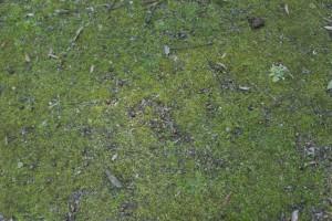 公園の地面。ドングリも多い。