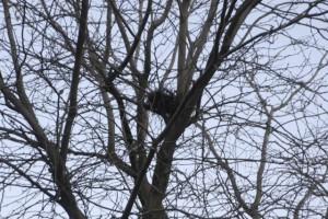 ハトの巣かな?