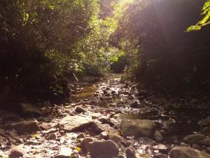 森戸川の源流